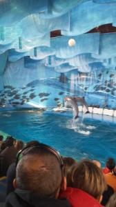 zoodelfines