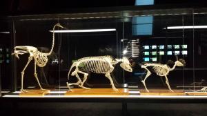 museu blau esquelets