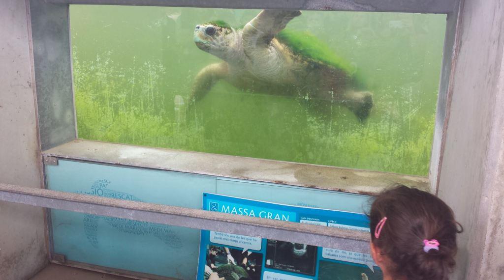 sortir amb nens al cram tortugues