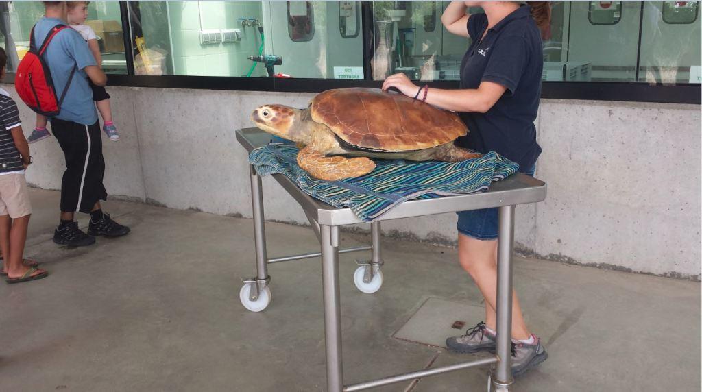 sortir amb nens al cram clínica de tortugues