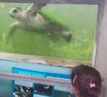 amb nens al cram tortugues barcelonapetits