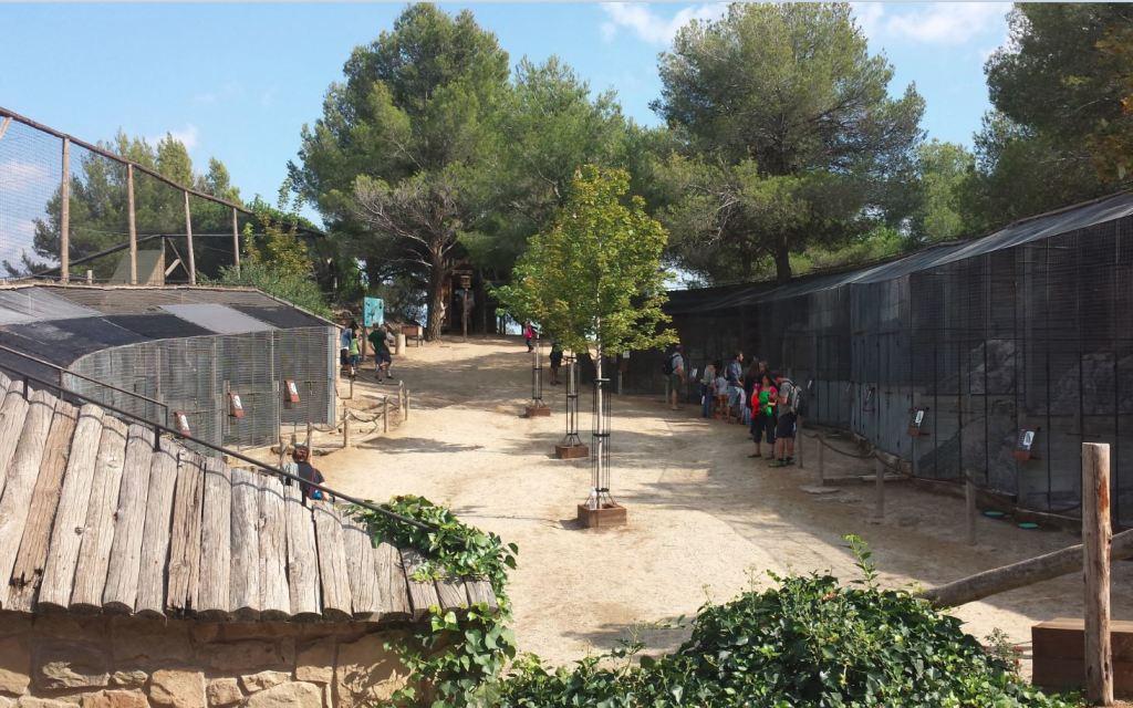 barcelonapetits sortir amb nens aviari cim aligues