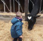 sortir amb nens a la fageda natura i vaques